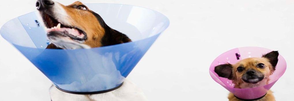 Como-Hacer-un-Cono-para-Perros-o-Collar-Isabelino
